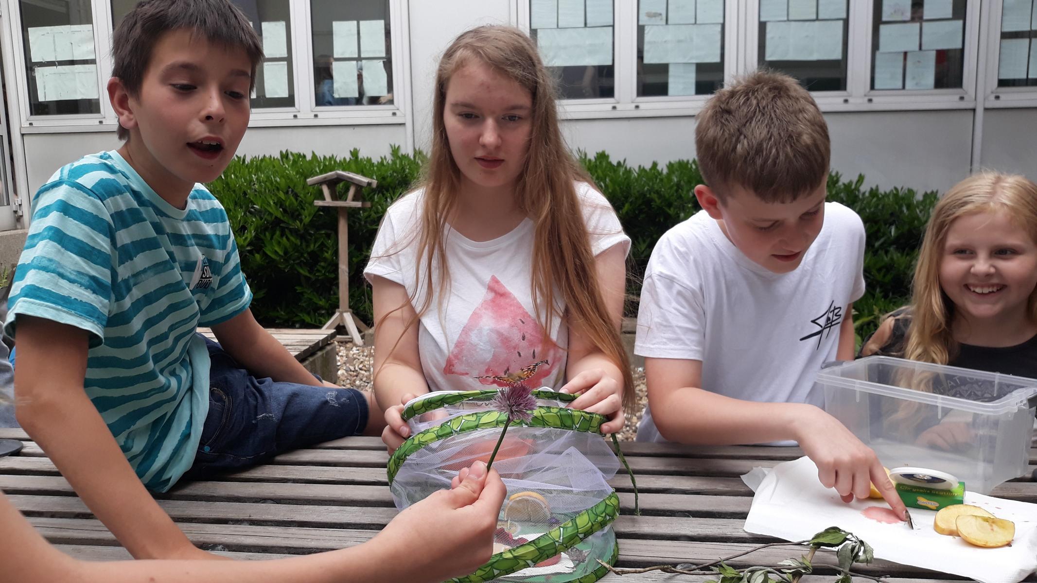 Anwendungsorientierter Biologieunterricht: von der Schmetterlingszucht zu blühenden Schulgärten!